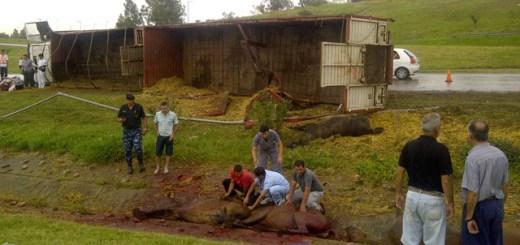 Caballos murieron tras vuelco de camión (Foto: Cadena3)