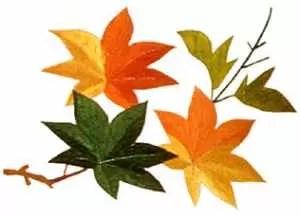 日本神道・11月は来年の運命が作られる月