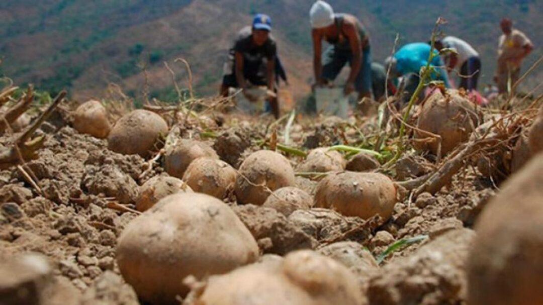 Epe II casos sector agroalimentario