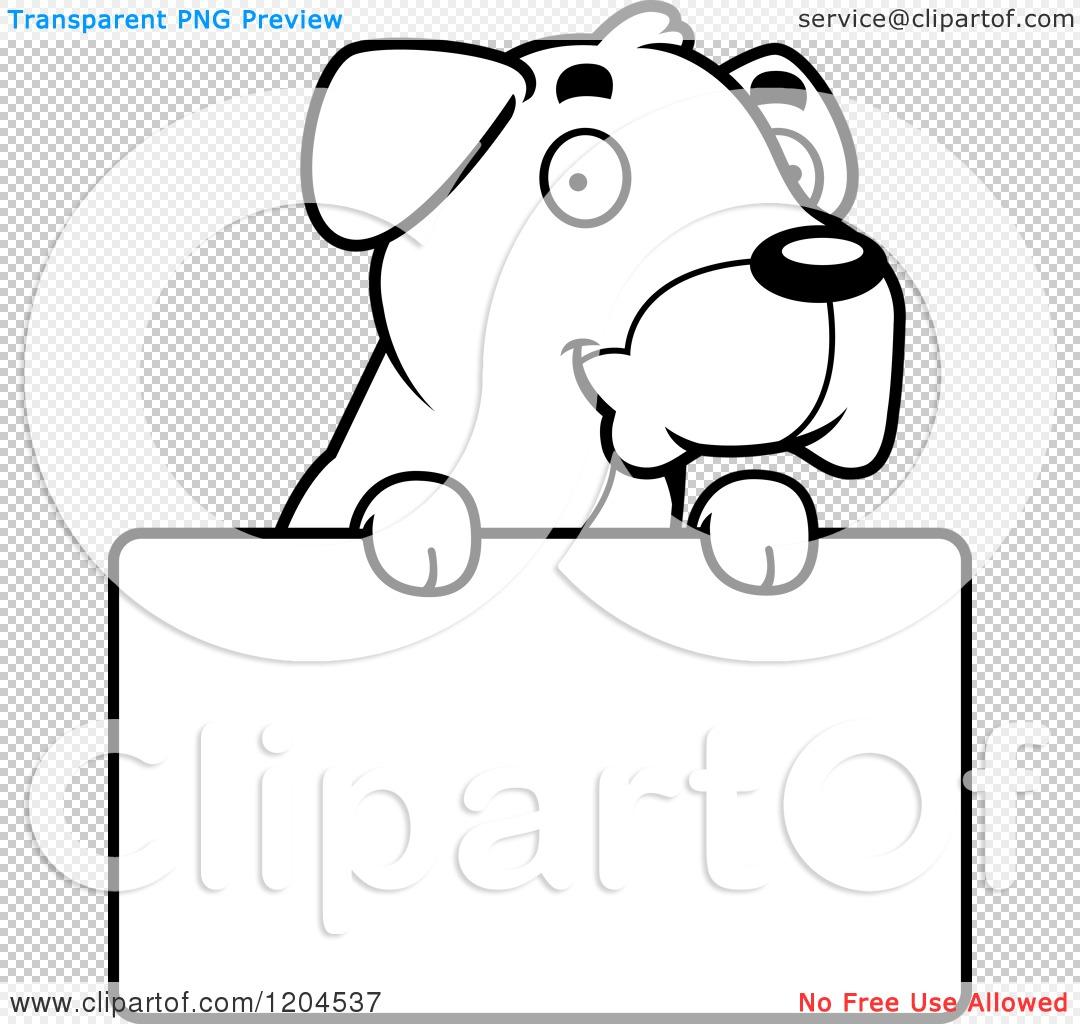 Boxer Dog Faqs