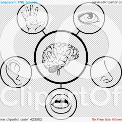 Five Senses Diagram Lewis Dot For A Cation 5 Clipart Black And White 2238 Applestory