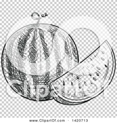 watermelon sketched illustration vector clipart royalty clip tradition sm