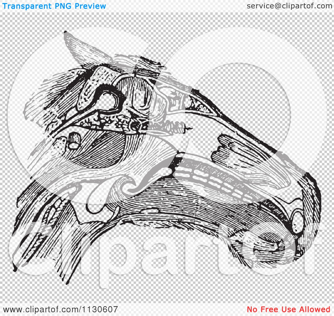 horse neck diagram schematic of steam power plant clipart a retro vintage head with