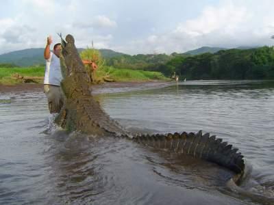 Crocodile & Bird Watching Tour Tarcoles River