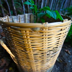 Kitchen Solutions And Bathroom Window Curtains Broken Basket Reuse? Potato Planters! | Trash Backwards Blog