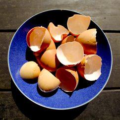 Compost Bin For Kitchen Sink Cabinets Lowes 33 Excellent Egg Shell Reuses | Trash Backwards Blog