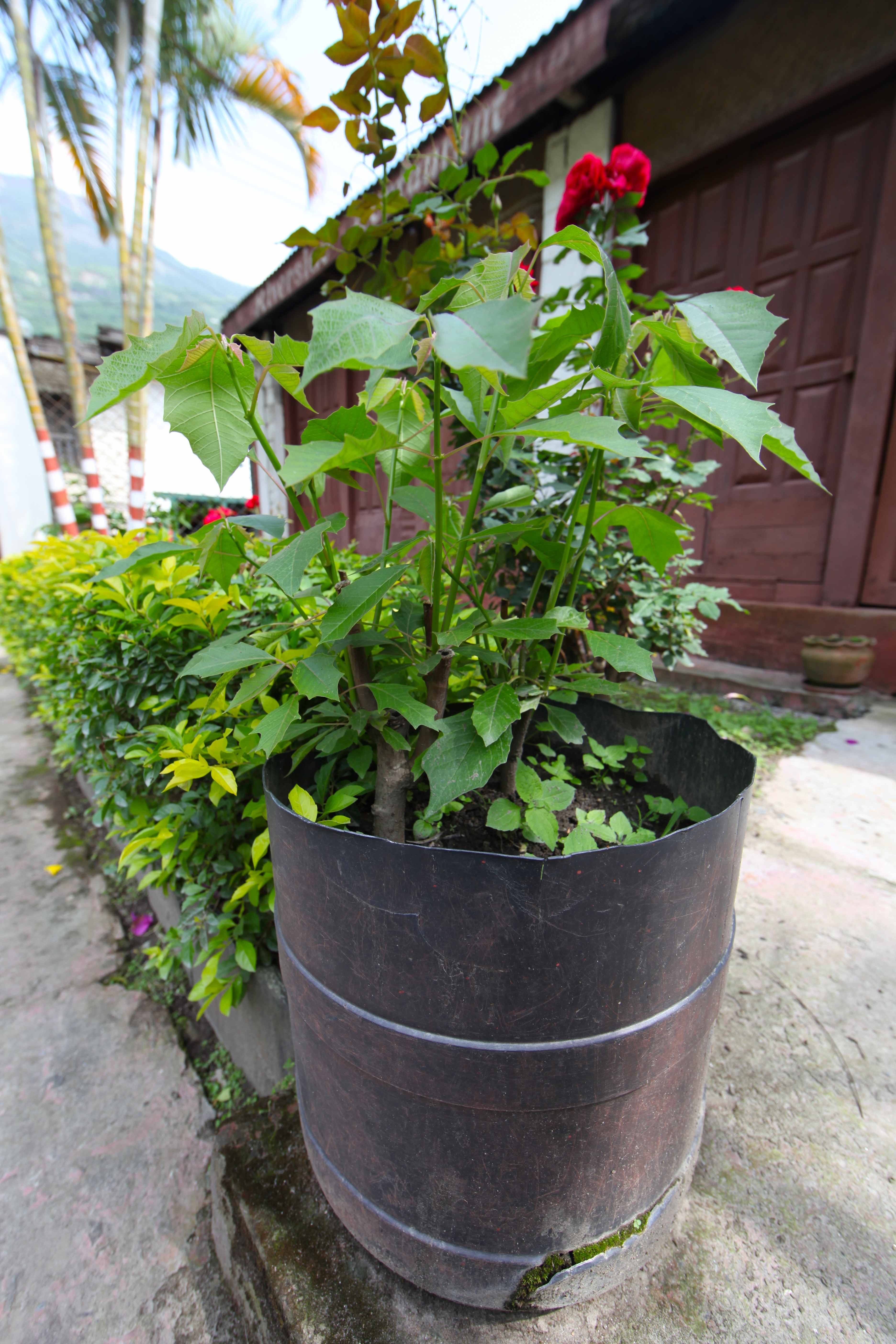 5 DIY Planters From the Himalaya