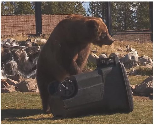 bear proof trash can