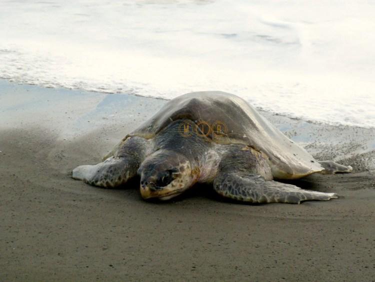 Tortuga turismo sostenible