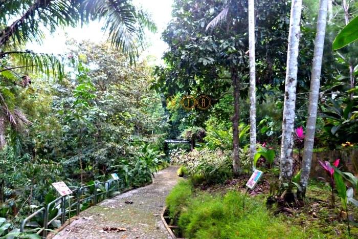 Los senderos del Discovery Garden esconden pequeños secretos. Rainforest Discovery Centre,Sepilok