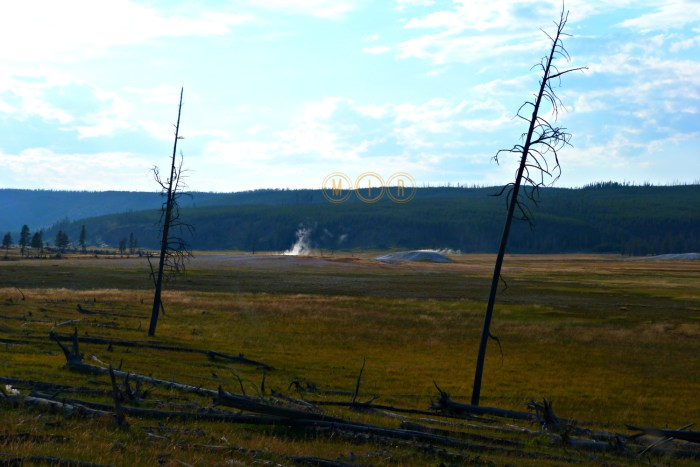 Yellowstone Fountain Flat