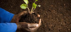 Paysan, agriculteur, exploitant : quelle différence ?