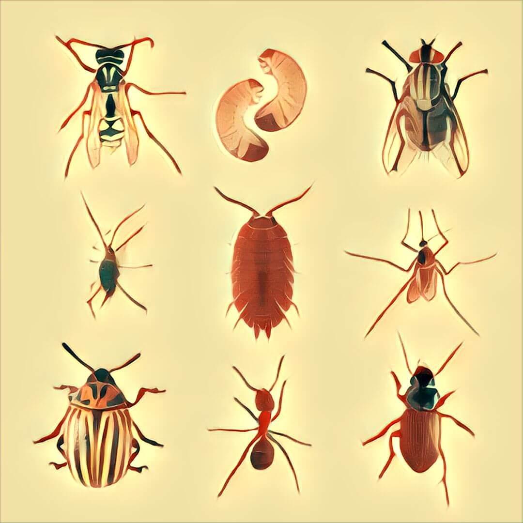 Insekten  TraumDeutung