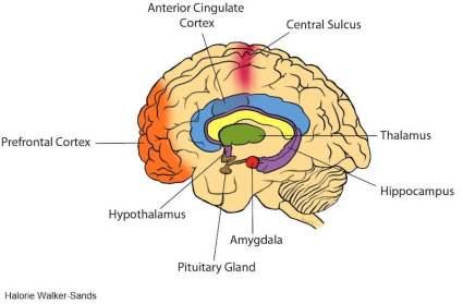 Brain Image_Walker Sands
