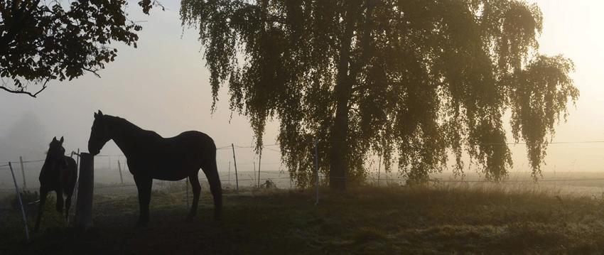 Landschaft mit Pferden Foto: Monique Münch