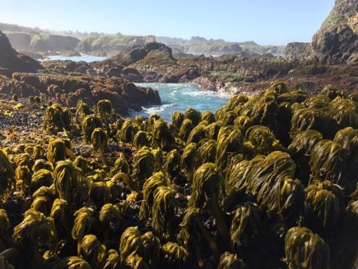 See-Palmen-Meer