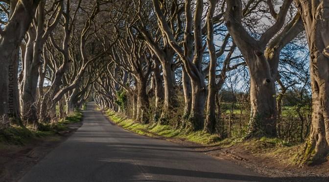 THE DARK HEDGES – COUNTRY ANTRIM – NORTHERN IRELAND #DiscoverNI