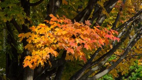 2016-10-26-fall-color-no-3