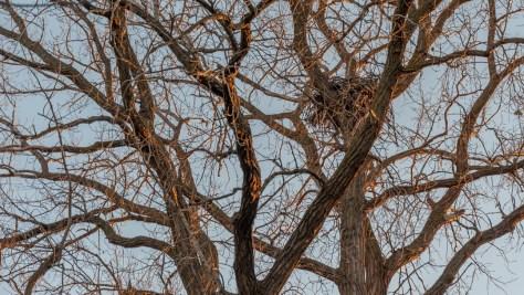 2016-12-10-eagle-nest
