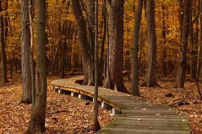 fall-1432252__340