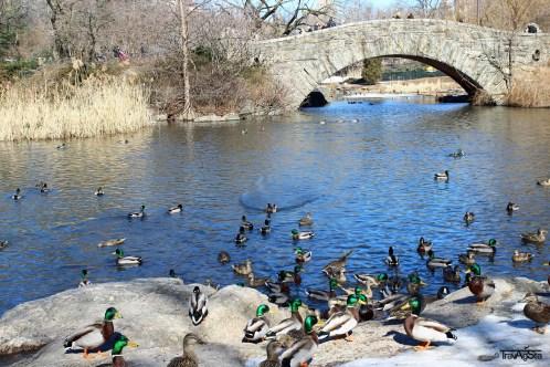 Central Park (3)t