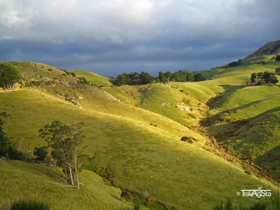 Otago Peninsula - New Zealand