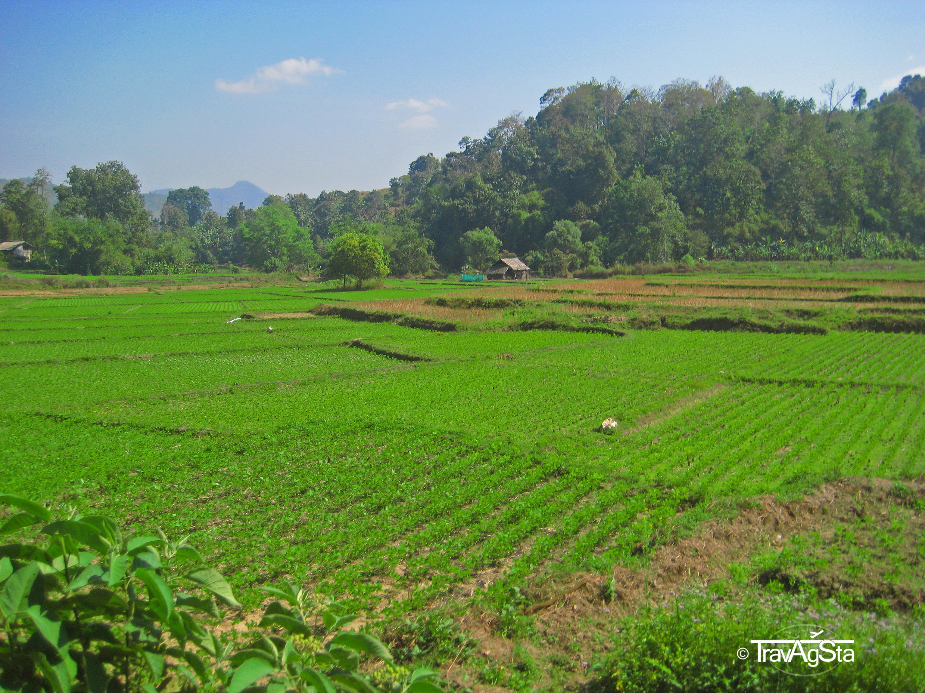 Chiang Mai – a cold train ride to the cheap north!