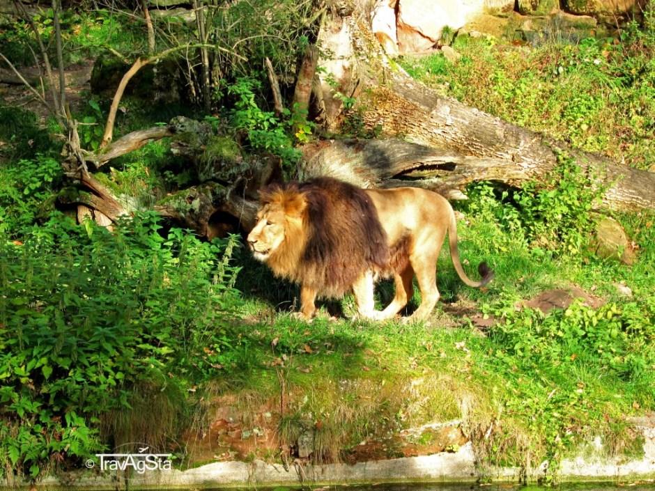 Nuremberg Zoo, Nuremberg, Bavaria, Germany