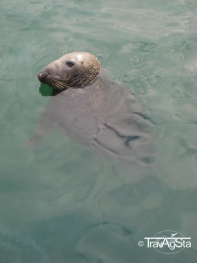 Seals in Howth