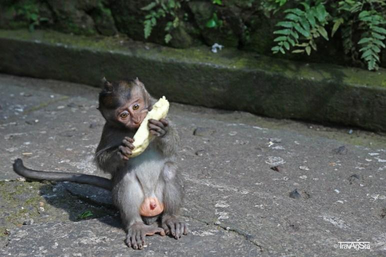 Monkey Forest, Ubud, Bali, Indonesia