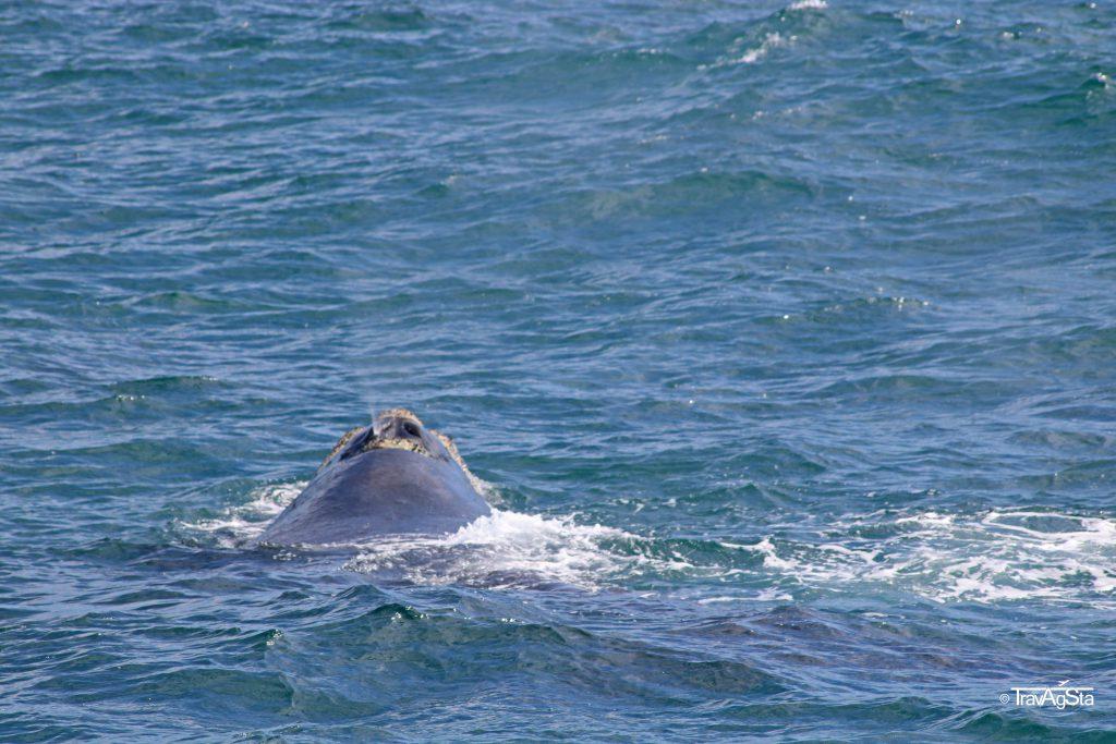 Whale Coast, South Africa