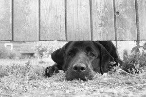Moral de chien