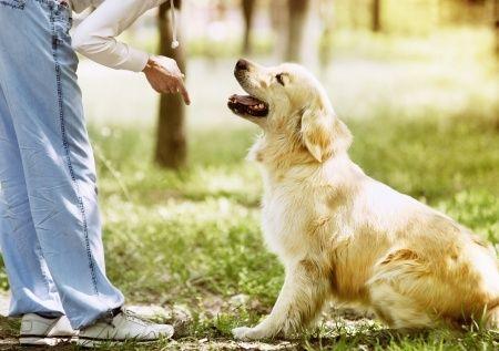 Comment devenir educateur de chiens