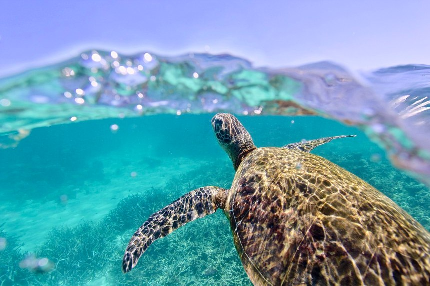 sea turtle sustainable tourism