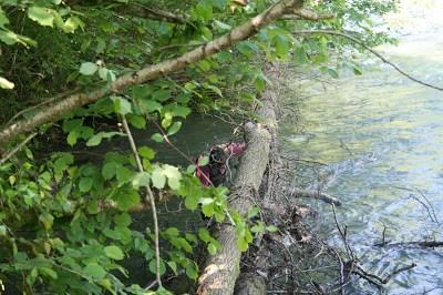 Enlèvement d'arbres gave de Pau