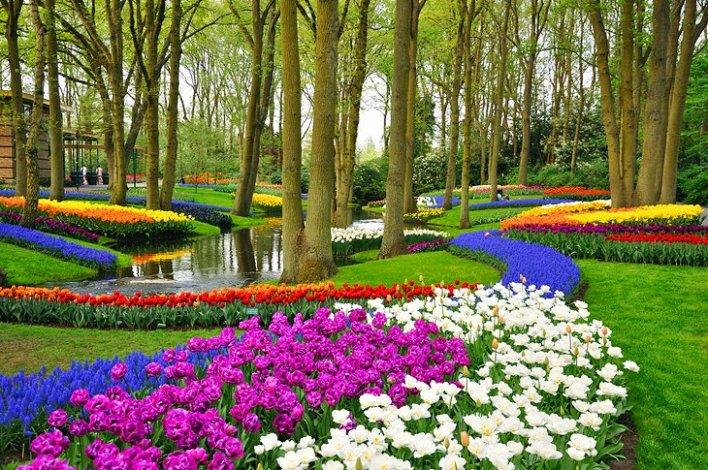 السياحيّة الربيعيّة في هولندا