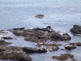 Sea lions!