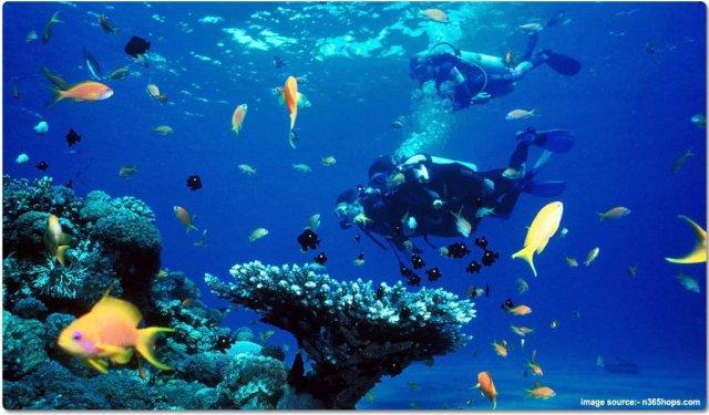 Scuba diving in Lakshadweep