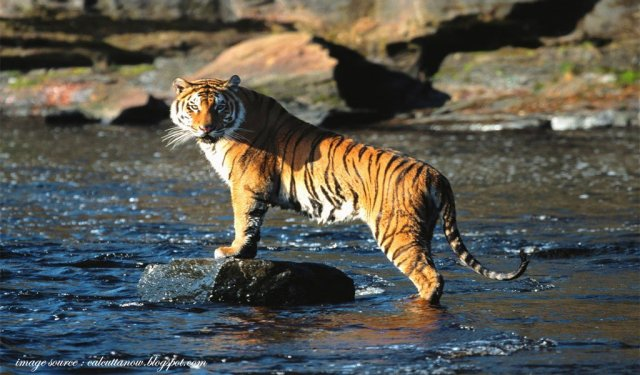 Sundarbans : best places to visit in november in india