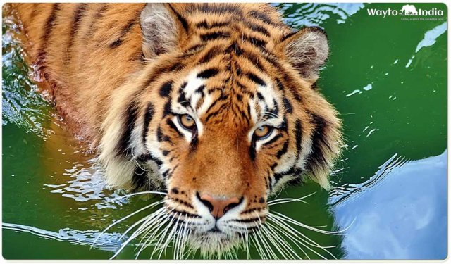 Best Places to Spot Tigers in India : Sunderban National Park
