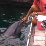 【海外旅行】パラオバベルダオブ島ドライブイルカ濃い交流【総集編】drive dolphin friendship Babeldaob Palau