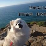 わんこと海外旅行 【羽田空港動物検疫編】