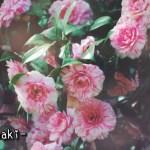 平泉温泉 果実の森 東北旅行 東北の春
