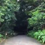 【一人旅】沖縄 ガンガラーの谷