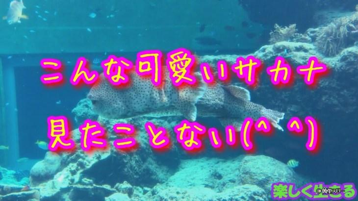 美ら海水族館で、めっちゃ可愛い魚に出会った【ひとり旅】【沖縄】
