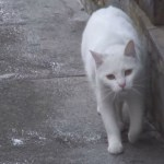 World heritage Cat trip,Day14-Toledo / 世界遺産 猫旅 14日目-トレド