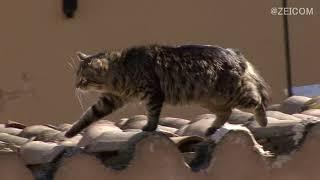 Mediterranean Cat trip,Day 34-Athens(2) / 地中海 猫旅 34日目-アテネ(2)