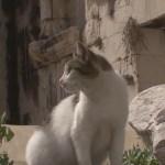 World heritage Cat trip,Day31-Split(2) / 世界遺産 猫旅 31日目-スプリット(2)