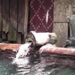 奈良田温泉白根館 露天風呂の湯口