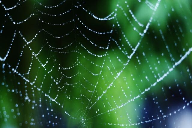 棒 スプレー 蜘蛛の巣 除去